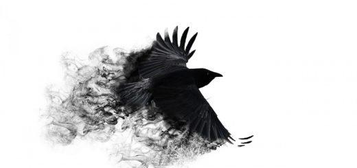 Черно белый Ворон