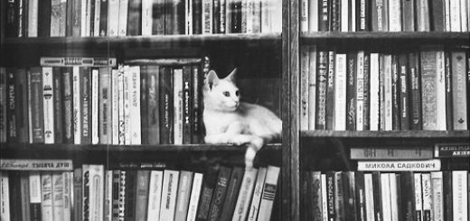 Черно-белая фотография книжного шкафа с кошкой