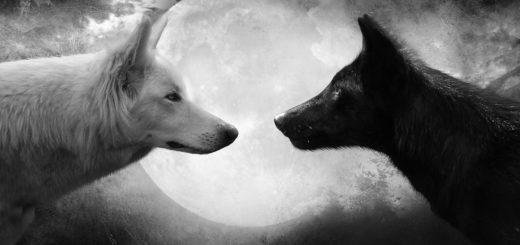Вражда: черный и белый волки на фоне луны