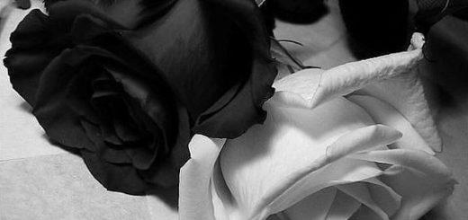 Черная и белая розы, черно-белая картинка
