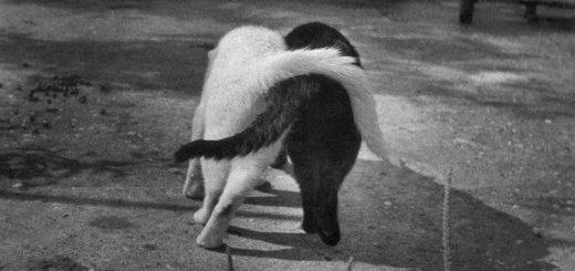дружба, черно-белая картинка. два обнимающихся кота