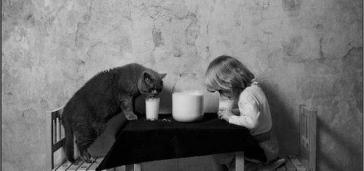 Кот и ребенок, дружба, черно-белая картинка