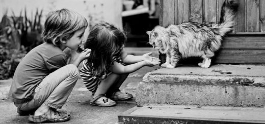 дружба, дети, кошка, черно-белое фото
