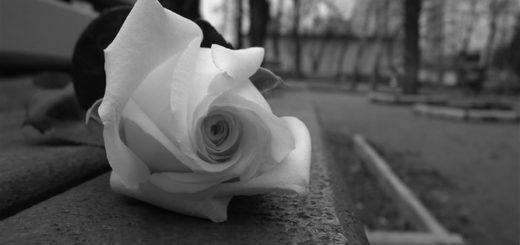 белая роза, одиночество, роза на скамейке, цветы, черно-белая картинка