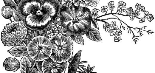 Черно-белая картинка, цветы