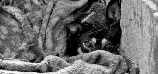 Собака под пледом,бездомная собака, черно-белое фото
