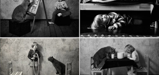 дружба человека и кота