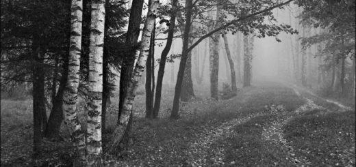 Природа, русский пейзаж, черно-белое фото