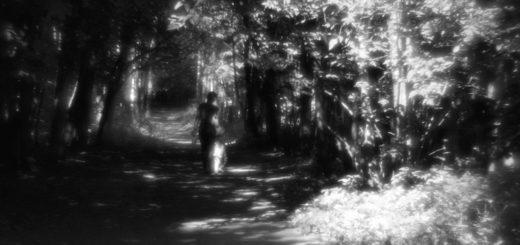 темные аллеи, черно-белое фото