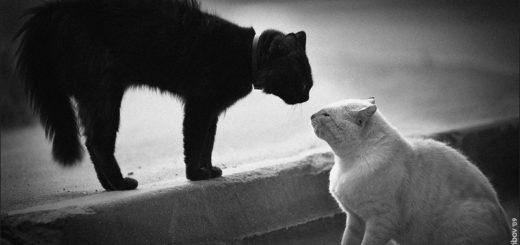 противостояние, черно-белое фото