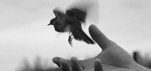 птица в руке, черно-белое фото
