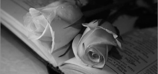 две розы на страницах книги