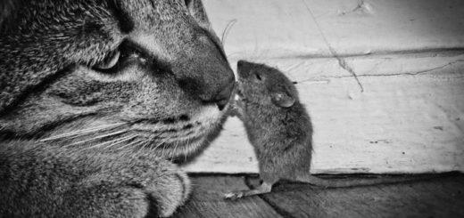 кошка и мышка, черно-белое фото