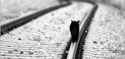 стремление, дорога, кошка, черно-белое фото
