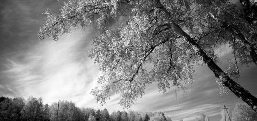 роща, черно-белое фото