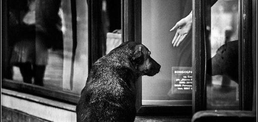 собака и человек, бескорыстие, черно-белое фото