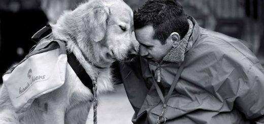 собака-друг человека, черно-белое фото