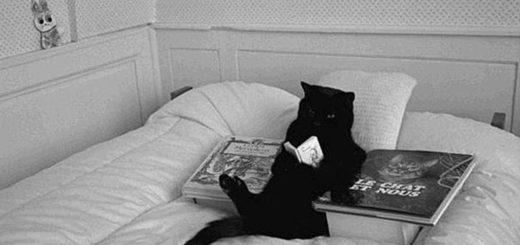 кот с книгой, черно-белое фото