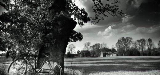 природа, черно-белое фото