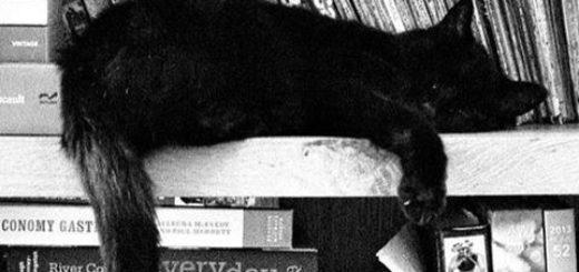 кот и книги, кот на полке книг, черно-белое фото