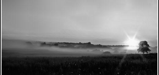 солнечное утро, заря, восход, природа, черно-белое фото