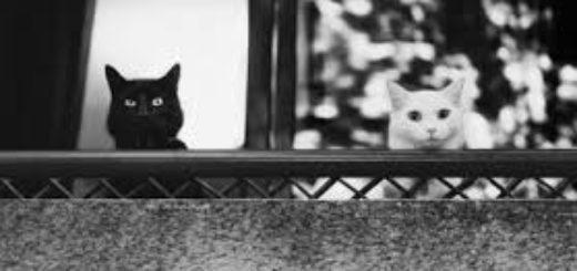 противоположности, черный и белый коты