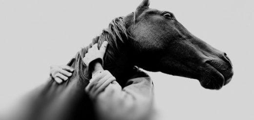 Хорошее отношение к лошадям, Маяковский