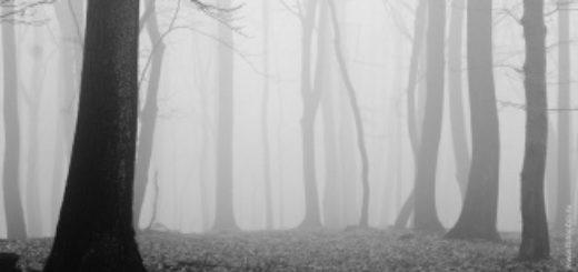 Лес в тумане, осенний лес