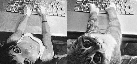 кот и компьютер, клавиатура и кот