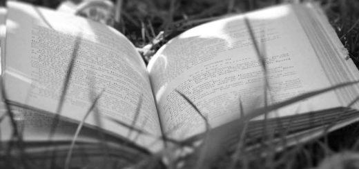 книга в траве, открытая книга