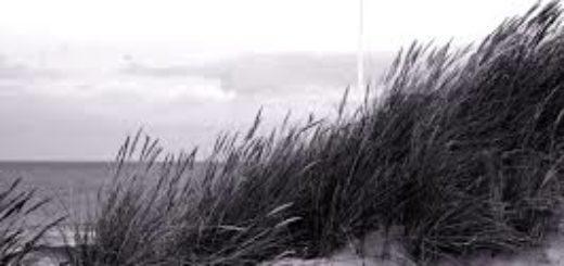 трава, русский пейзаж, земля
