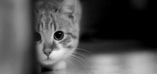 кот прячется, страх, трусость