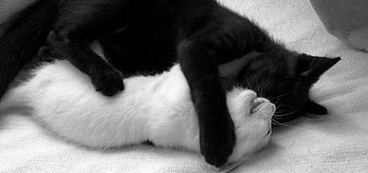 кот и кошка, любовь