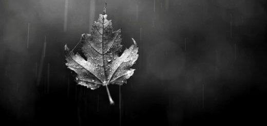 Осенний лист, листок, падающий лист