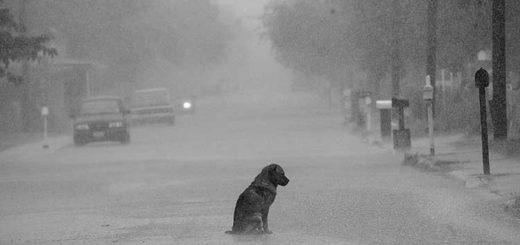 одинокий пес, безразличие