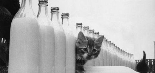котенок, молоко