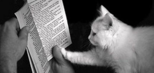 книжка и кошка