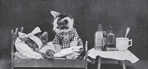 кошки, лечение, больничный
