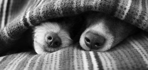 собаки, дружба