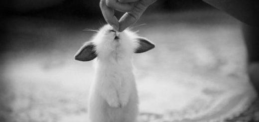 отзывчивость, доброта, любовь