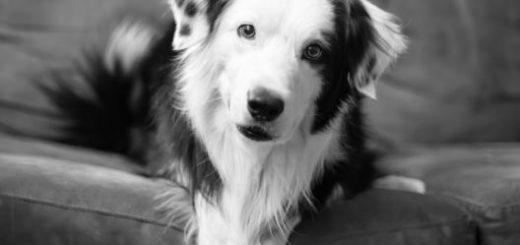 собака, пес