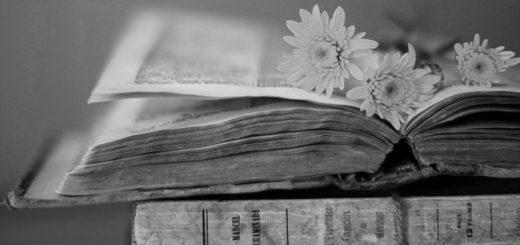 старая книга, гербарий