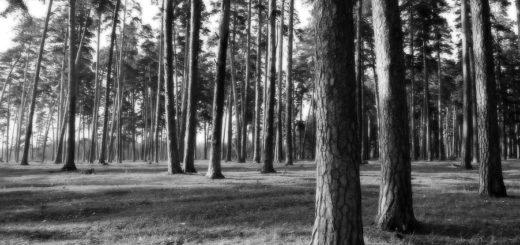 русский лес, природа, деревья