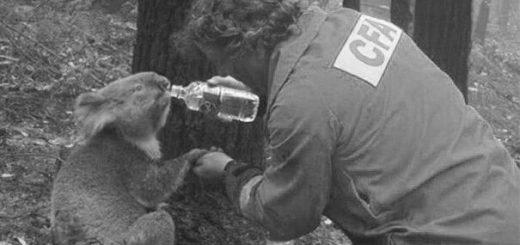 подвиг: спасение животного