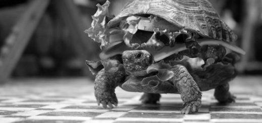 черепаха-бургер