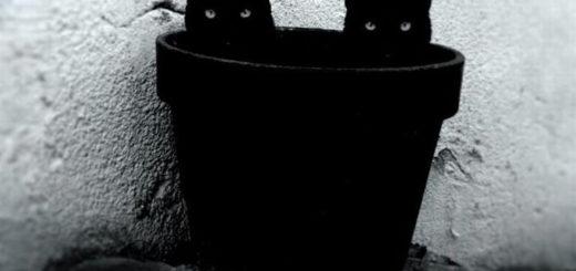 любовь, коты, два черных кота