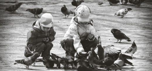 дети кормят птиц, доброта