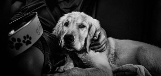 ответственность, человек и собака, дружба