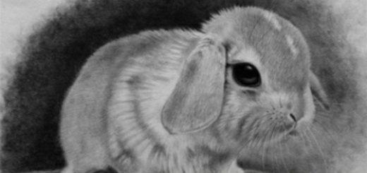 заяц, символ трусости и страха
