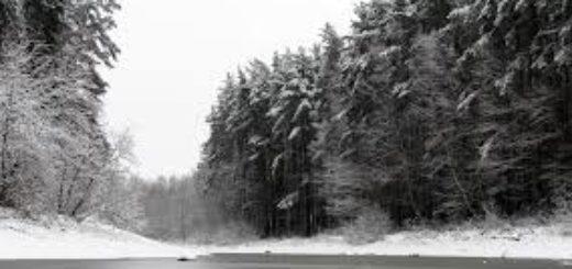 природа, зимний лес, снежная дорога